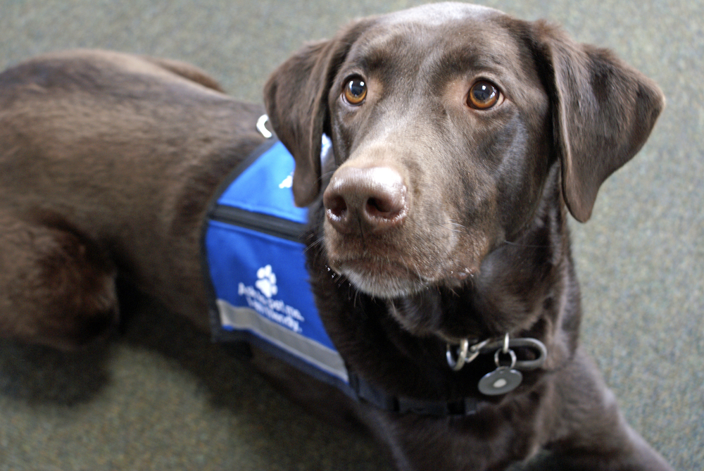 Therapy Dogs Calm Stressed Out Students During Final Exams