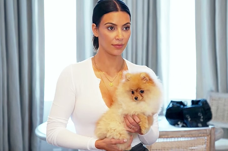 Pomeranian – Kim Kardashian's Tiny Yet Vivacious Pet