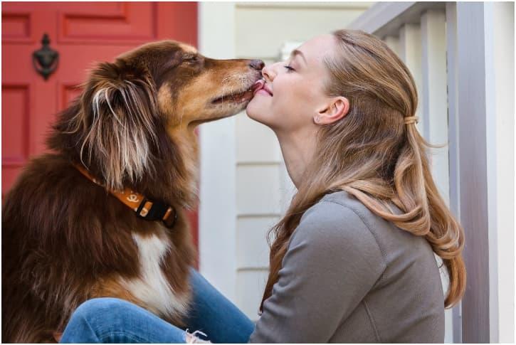 Australian Shepherd – Amanda Seyfried's Instagram Star